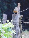 Pássaro - AGUDO.jpg